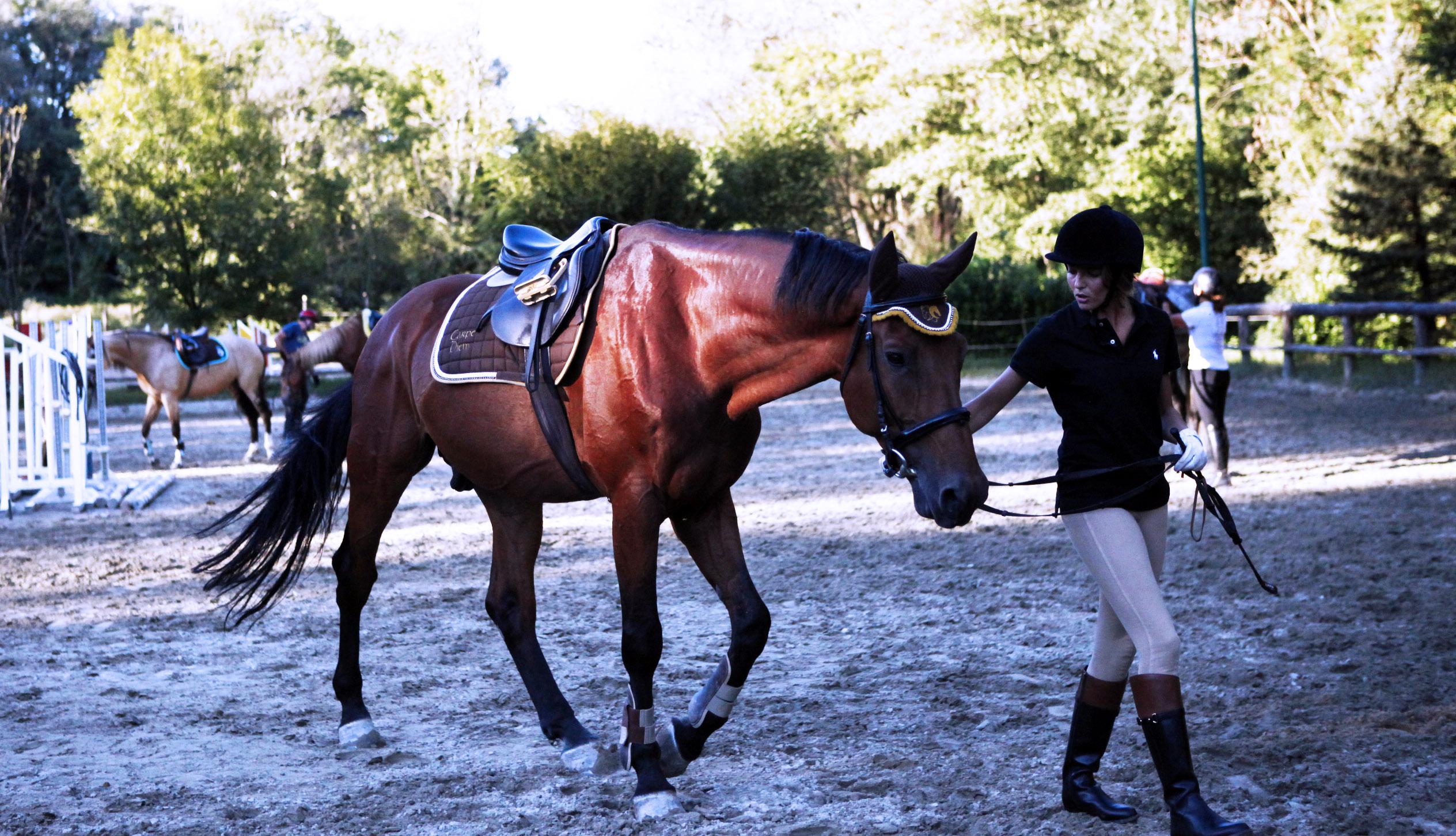 imparare a portare il cavallo a mano
