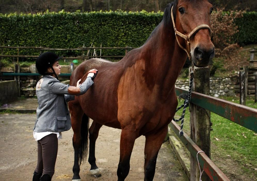 Pulizia del cavallo