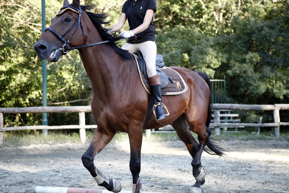 stivali da equitazione cuoio bicolor