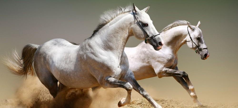 L'irruenza del cavallo quando le temperature scendono