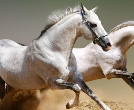 Salto ostacoli equitazione equitazione - Avere un cavallo ...