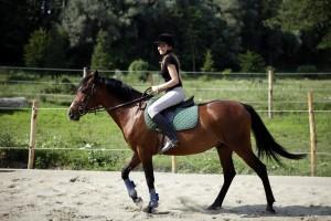 fashion horse riding