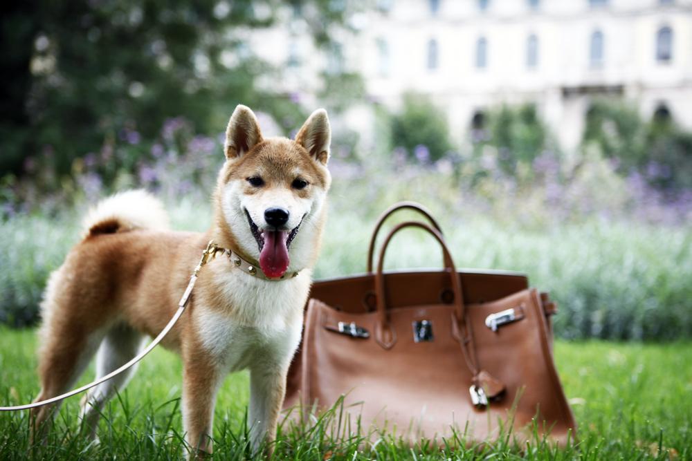 birkin with dog