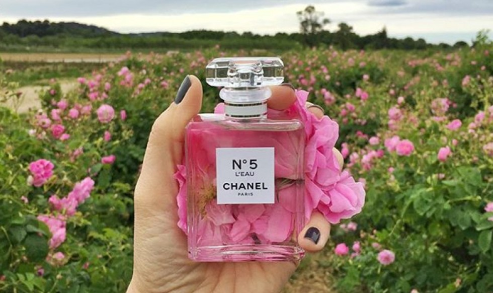 chanel n 5 l 39 eau grasse experience the ugly truth of v. Black Bedroom Furniture Sets. Home Design Ideas