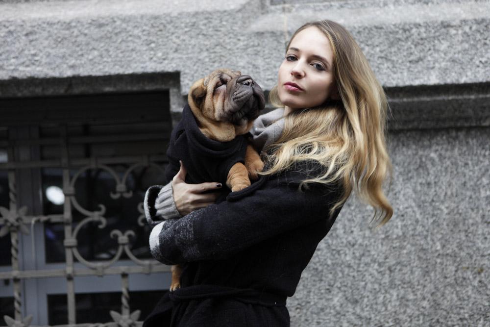 dog puppy sharpei fashion